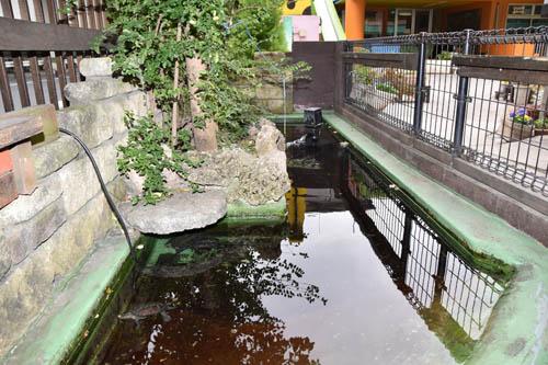 上水保育園本園アヒル池