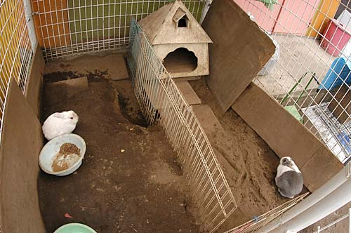 上水保育園本園ウサギ小屋